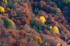 Autumn creations. Colorful forest during autumn season Stock Image