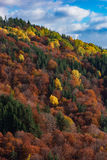 Autumn creations. Colorful forest during autumn season Stock Photo