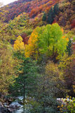 Autumn creations. Colorful forest during autumn season Stock Images