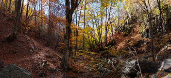 Autumn creations. Colorful forest during autumn season Royalty Free Stock Photos