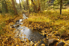 Autumn Creek. In Sierra Foothills, California Royalty Free Stock Photography
