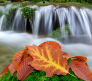 Autumn creek. In Czech republic Royalty Free Stock Photography