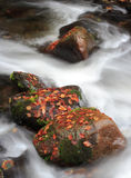Autumn creek. With coloured leaves on the boulder Royalty Free Stock Images
