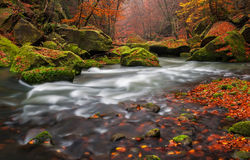 Autumn Creek. View of a beautiful autumn creek in Czech-Saxony Switzerland, panoramic picture Stock Image