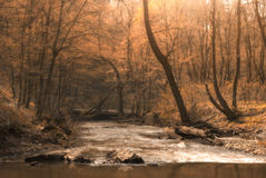 Autumn Creek Stockfotos