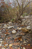 Autumn Creek Foto de Stock Royalty Free