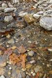 Autumn Creek Lizenzfreies Stockbild