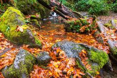Autumn Creek Stock Afbeelding