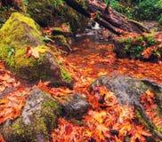 Autumn Creek Stock Afbeeldingen