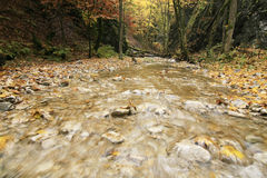 Autumn creek Royalty Free Stock Photos