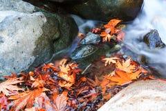 Autumn Creek Royalty-vrije Stock Foto