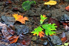 Autumn Creek Background Royalty Free Stock Photos