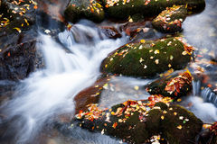 Autumn Creek Stock Images