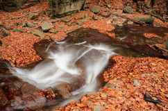 Autumn creek Stock Image