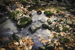Autumn creek. Closeup with yellow maple trees and foliage on rocks in forest Stock Image