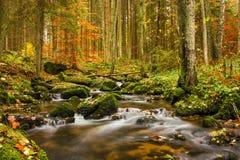 Autumn creek. In Czech Republic stock images