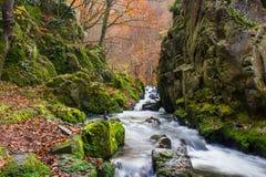 Autumn creek. In Czech Republic royalty free stock photo