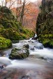Autumn creek. In Czech Republic royalty free stock photos