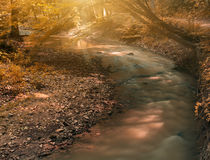 Autumn creek. Flowing stream on the autumn forest Stock Photography