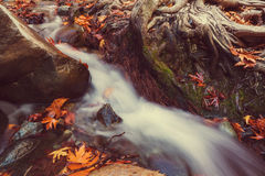 Autumn creek Royalty Free Stock Photography