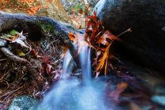 Autumn creek Stock Photography