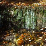 Autumn creek with green moss and leafs Royalty Free Stock Images