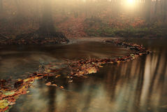 Autumn creek. Leaves on flowing autumn stream Royalty Free Stock Photography