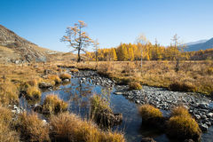Autumn, creek, a lonely tree Royalty Free Stock Photo