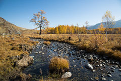 Autumn, creek, a lonely tree Royalty Free Stock Images