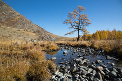 Autumn, creek, a lonely tree Stock Image