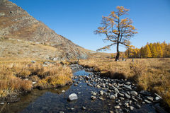 Autumn, creek, a lonely tree Royalty Free Stock Photos