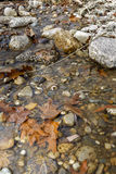 Autumn Creek Royalty Free Stock Image
