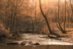 Autumn creek. Stream in the beautiful autumn forest Stock Photos