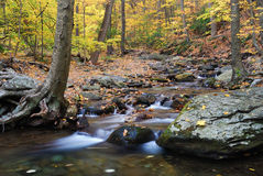 Autumn creek and trees. Autumn woods with yellow maple trees and creek with rocks and foliage in mountain royalty free stock photos