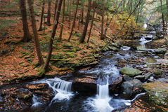 Autumn creek in woods with foliage Royalty Free Stock Images