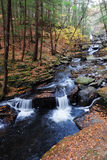 Autumn creek in woods with foliage Royalty Free Stock Photography
