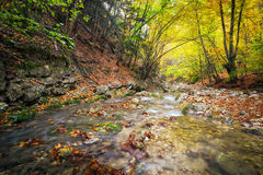Autumn creek woods with yellow trees foliage and rocks in forest Royalty Free Stock Photo