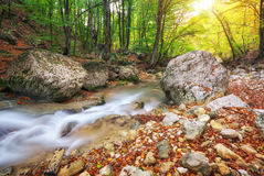 Autumn creek woods with yellow trees foliage and rocks in forest Stock Images