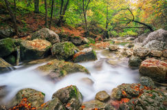 Autumn creek woods with yellow trees foliage and rocks in forest Stock Photography
