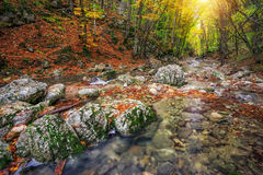 Autumn creek woods with yellow trees foliage and rocks Royalty Free Stock Photography
