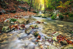 Autumn creek woods with yellow trees foliage and rocks in forest. Mountain Royalty Free Stock Images