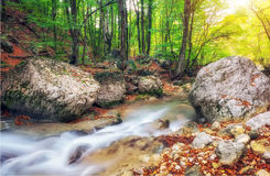 Autumn creek woods with yellow trees foliage and rocks in forest. Mountain Royalty Free Stock Photography