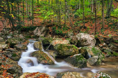 Autumn creek woods with yellow trees foliage and rocks in forest. Mountain Stock Photography
