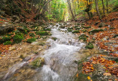 Autumn creek woods with yellow trees foliage and rocks in forest. Mountain Stock Images