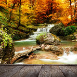 Autumn creek woods with yellow trees Royalty Free Stock Photography