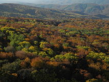 Autumn. In the Crimean forests, Ukraine Royalty Free Stock Images