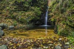 Autumn crocus.  Royalty Free Stock Photos
