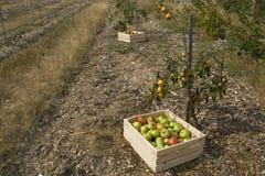 Autumn crop Royalty Free Stock Photos