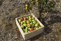Autumn crop Stock Photos
