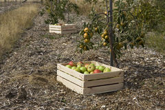 Autumn crop Stock Images